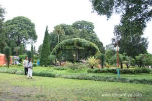 Kebun Teh Wonosari  ( sumber foto @internet  )