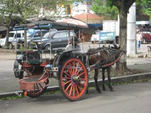 di KWB juga ada transportasi tradisional, andong atau dokar