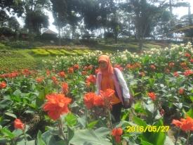 Asli Taman Bunga Milik Wisata Negeri Indonesia lho... Koleksi photograph by @NovyWriter
